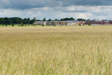 A view across Trumpington Meadows in June