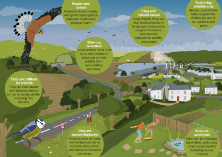 A diagram showing the importance of Local Wildlife Sites