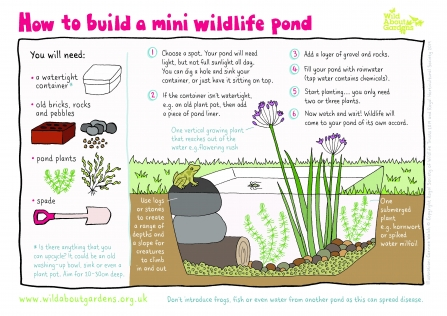 How to build a mini wildlife pond