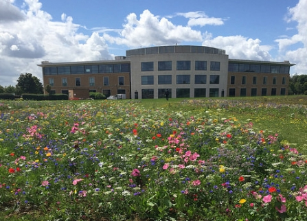 Wildflowers in bloom at Cranfield University