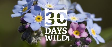 30 Days Wild Forget-me-nots by Chris Lawrence