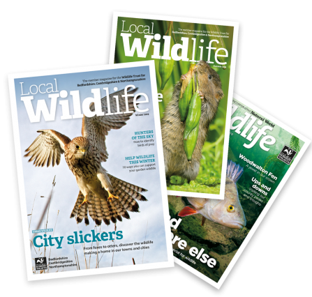 A fan of recent Local Wildlife magazines