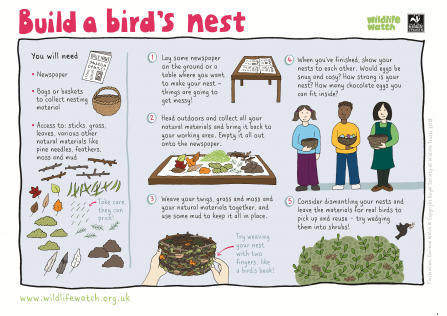 How to build a birds nest