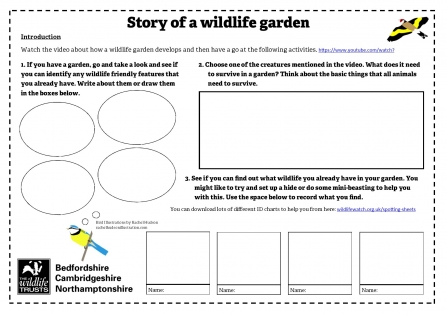 Story of a wildlife garden