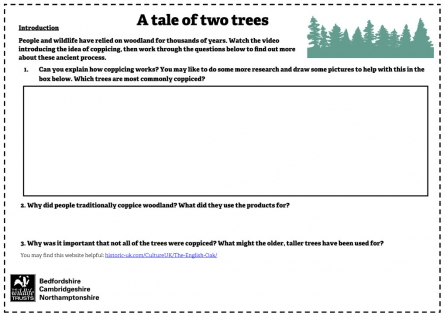 Tale of Two Trees Activity Sheet