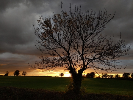 Tree at sunset by Rebecca Neal