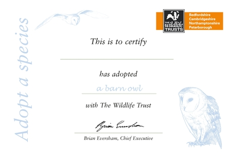 Adopt a Barn Owl | Wildlife Trust for Beds, Cambs & Northants