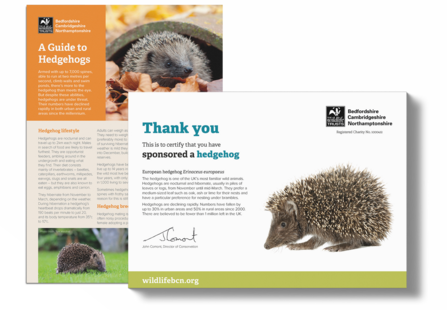 Sponsor A Hedgehog Certificate and Fact Sheet