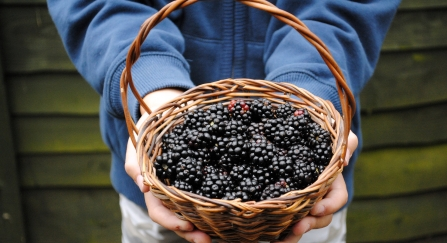 Blackberry picking by Amy Lewis