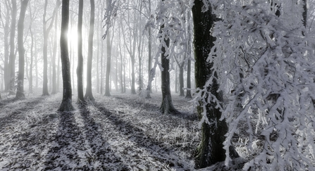 Beech woodland with hoar frost by Guy Edwards/2020VISION