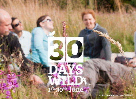 A picnic for 30 Days Wild