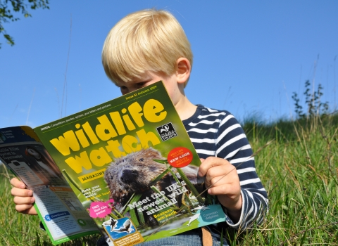 Boy reading Wildlife Watch magazine