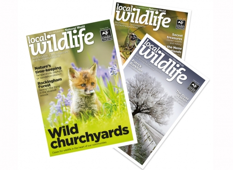 Copies of Local Wildlife Magazine