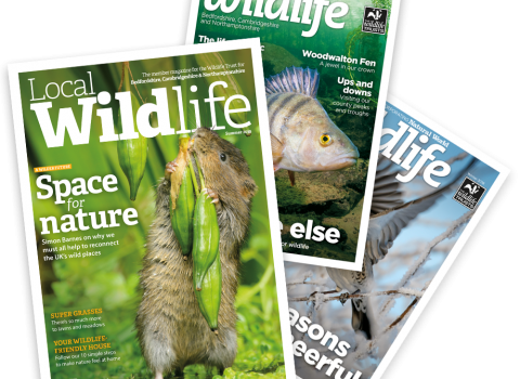 The three latest issues of Local Wildlife magazine
