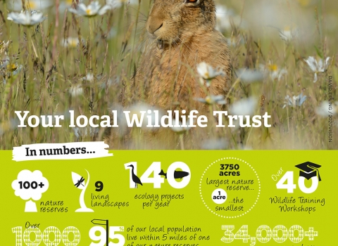 A poster with facts about the Wildlife Trust BCN