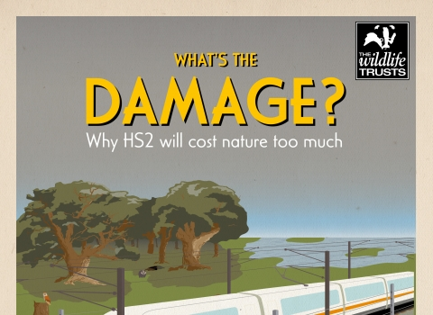 What's the Damage? Why HS2 will cost nature too much. Report cover.